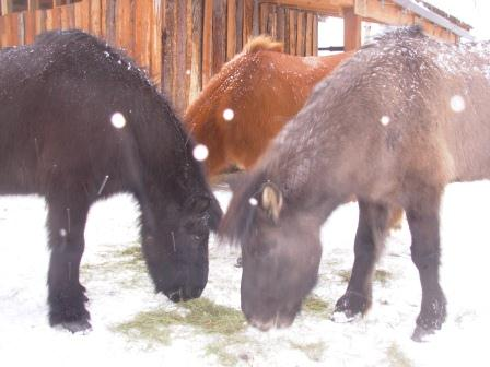 Horses get a snow day